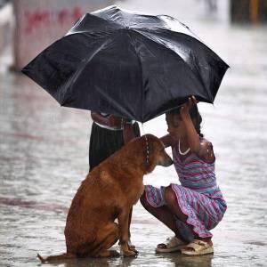 girl-umbrella-protect-stray-dog-monsoon