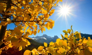 Autumn leaves with mountain
